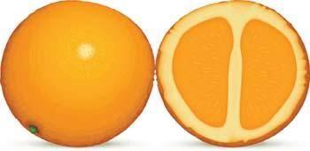 free vector Citrus fruit 1