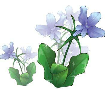 Flower of Seven color 17