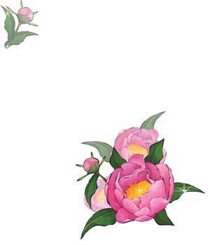 free vector Pion Flower 2
