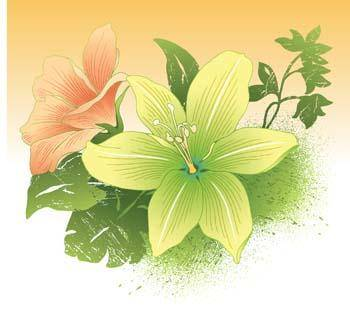 Lili Flower vector 4
