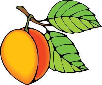 free vector Peach 2