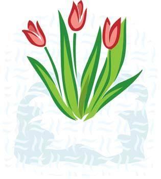 free vector Tulip Flower 2
