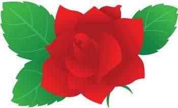 Rose Flower Vetor 11