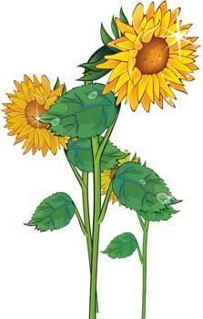 free vector Podsolnuh Flower 12