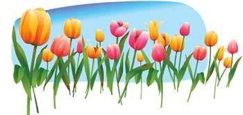Tulip Flower 19