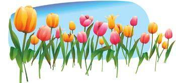 free vector Tulip Flower 19