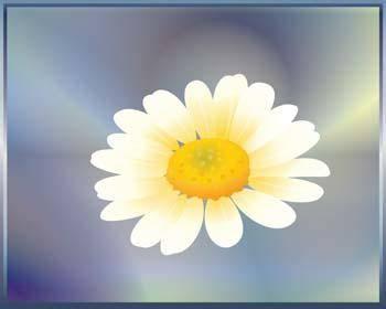 free vector Romashka daisy Flower 1