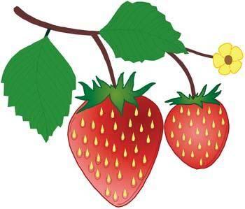 free vector Strawberry 7