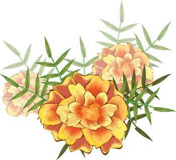 free vector Flower of Seven color 8