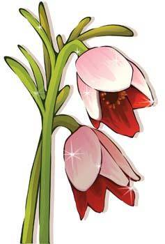 free vector Tulip Flower 24