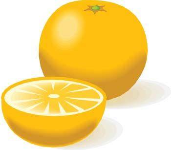 free vector Citrus fruit 2