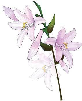 free vector Bell Flower 5