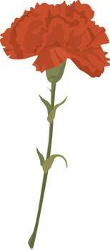 free vector Carnation Flower Gvozdika 1