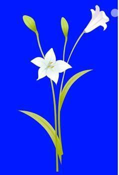free vector Bell Flower 2