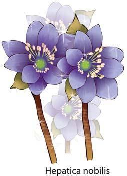 Flower of Seven color 60