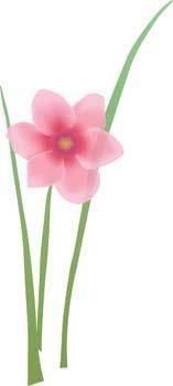 Flower of Seven color 84