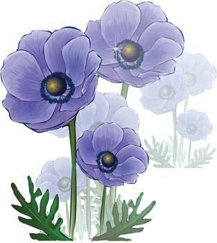 Flower of Seven color 16