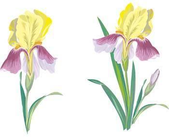 free vector Iris Flower 1