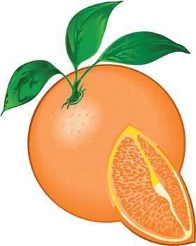 free vector Citrus fruit 5