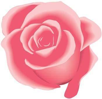 Rose Flower Vetor 26
