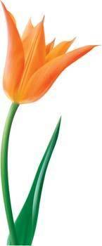 free vector Tulip Flower 14