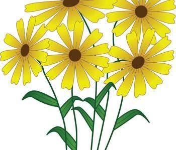 Gerberas Flower 1
