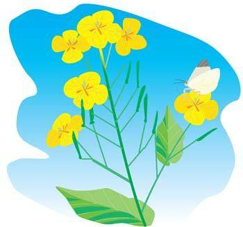 free vector Flower of Seven color 27