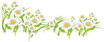 free vector Romashka daisy Flower 2