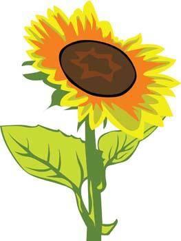 free vector Podsolnuh Flower 1