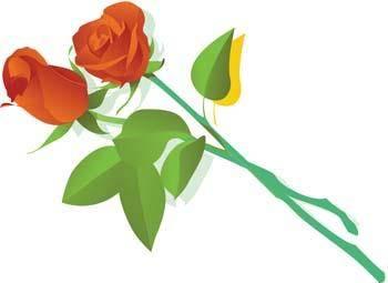 Rose Flower Vetor 6