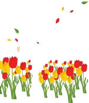 Tulip Flower 17