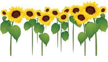 Podsolnuh Flower 3