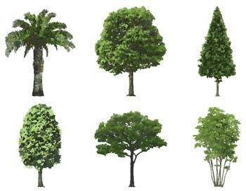free vector Isolated tree vector