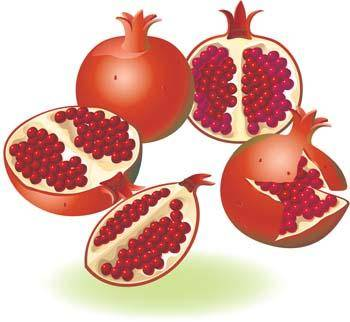 free vector Pomegranate 2
