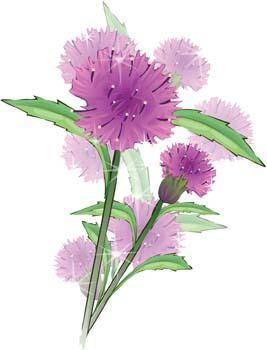 Thistle Flower Vector