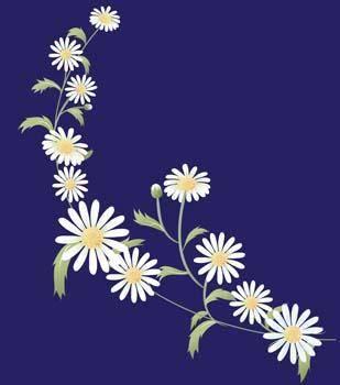 Romashka daisy Flower 8