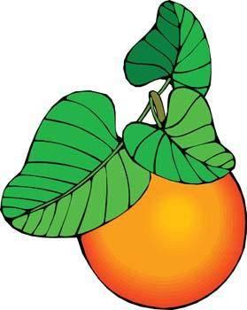 free vector Peach 5