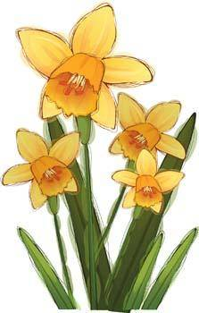free vector Narcis Flower 5