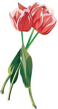 Tulip Flower 22