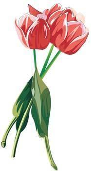 free vector Tulip Flower 22