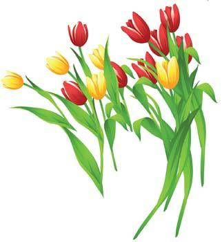 free vector Tulip Flower 11