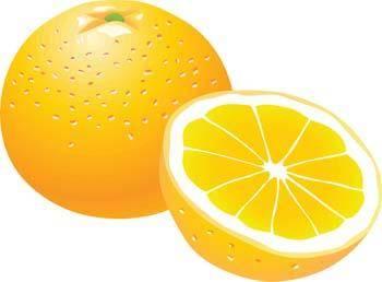 free vector Citrus fruit 10
