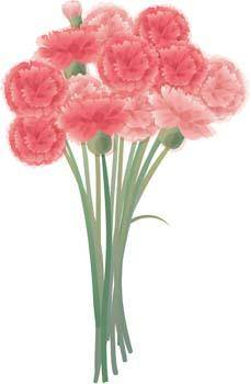 free vector Carnation Flower Gvozdika 7