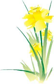 free vector Narcis Flower 14