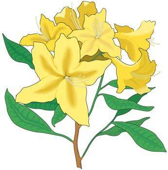 Azaleas Flower Vector