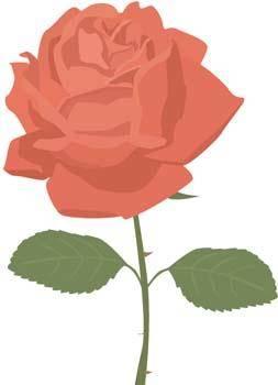 Rose Flower Vetor 4