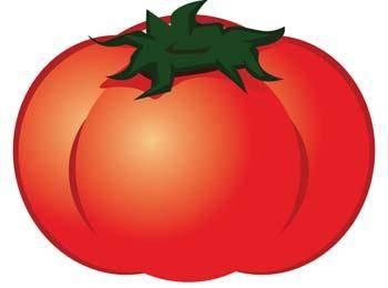 free vector Tomato 5