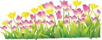 Tulip Flower 16