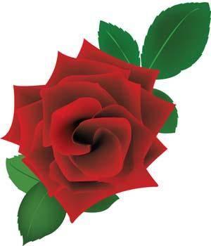 free vector Rose Flower Vetor 19