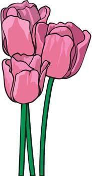 Tulip Flower 1